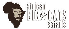 African Big Cats Safaris