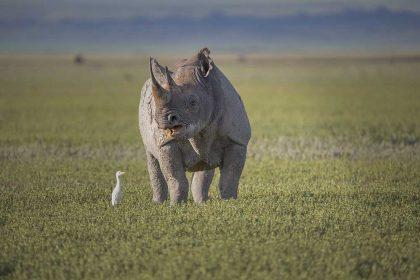 Ngorongoro 3a